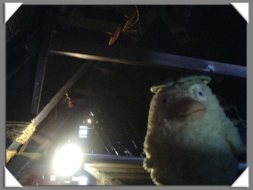オオトリさま 屋根裏部屋に侵入!