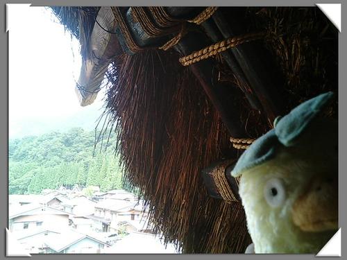 オオトリさま 屋根に大接近!